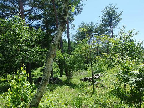 お〜がにっく屋周辺の森の写真